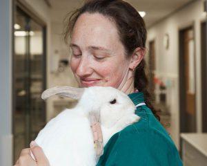 Vet with rabbit